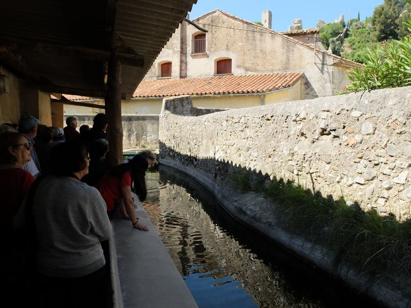 Canal arrosants Ollioules 140509 06