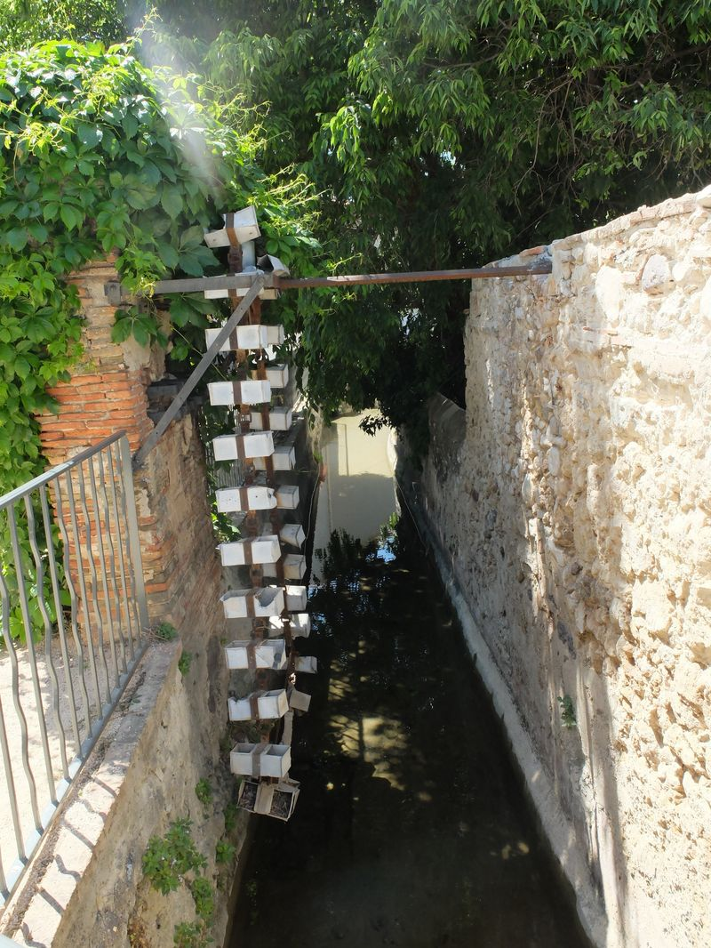 Canal arrosants Ollioules 140509 25